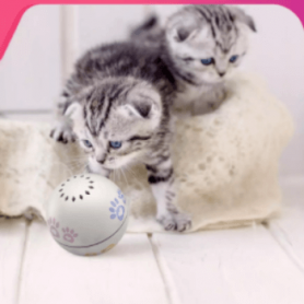 Pet Toy Smart companion ball for cat white